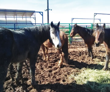 A Bit of the Wild Comes to The Sonoita Fairgrounds
