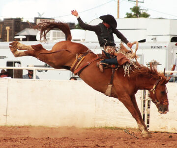 Rodeo at the Fairgrounds Scheduled