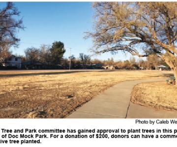 Commemorative Tree Sale Set for Town Park