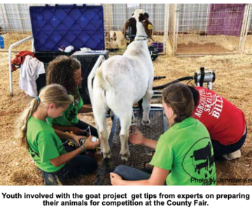 Livestock Activity Day Preps Kids for Fair